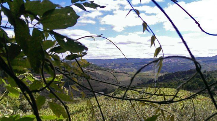 Alto-Douro,-de-wijnstreek-in-het-noorden-van-Portugal