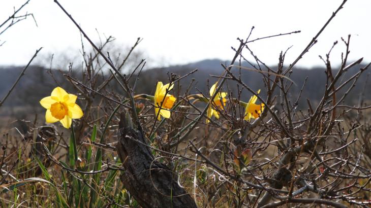 Tak van Sport | lente narcissen