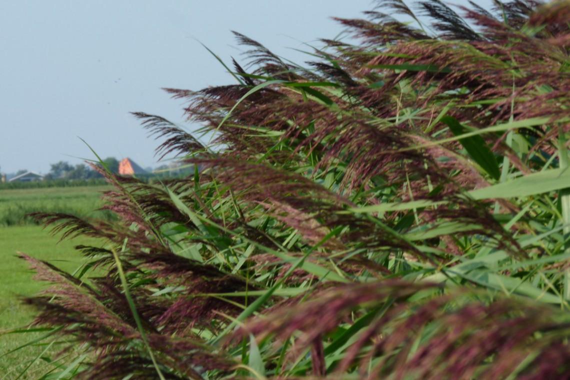 Sammers polder